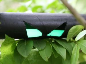 glowing eyes in bushes 3